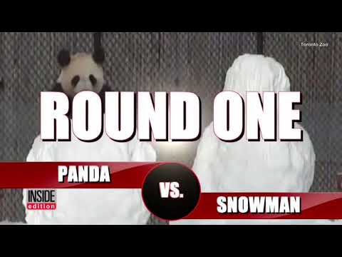 Panda vs Snowman Earrape Meme