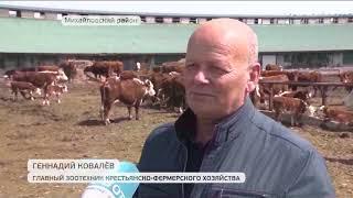 Вспышку ящура в Приморье ликвидировали