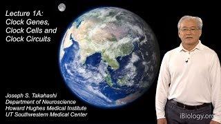 joseph takahashi ut southwestern hhmi part 1a circadian clocks clock genes cells and circuits