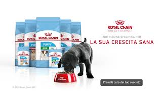 Royal Canin Puppy: Alimenti specifici per la sua crescita sana