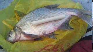 Рыбалка на Чумыше.