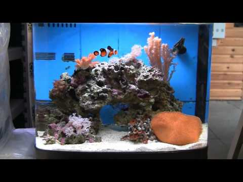Keeping Marine Fish Successfully