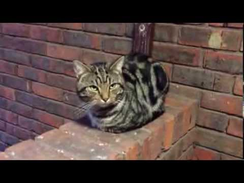 Homeless sweet cat meowing