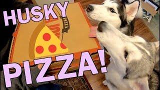 Siberian Huskies Order Pizza & Have Fun!