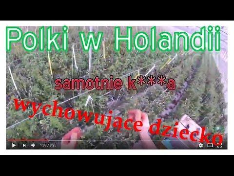 Polki w Holandii, samotnie wychowujące dziecko. Praca i życie w Holandii.