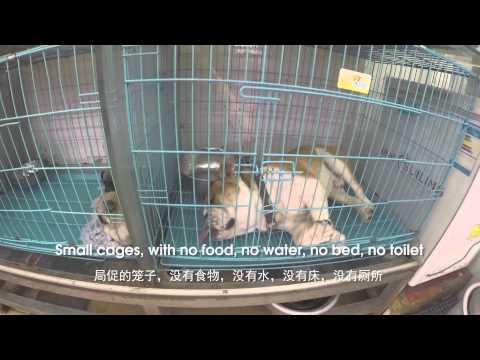 Guangzhou Pet Market China