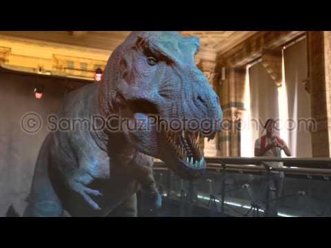 T Rex at Natural History Museum, London