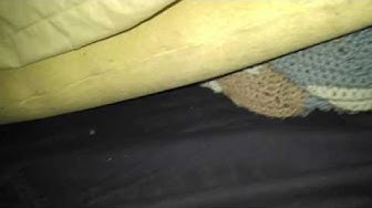 Live Bed Bug Heat Treatment by Florida Bed Bug Experts