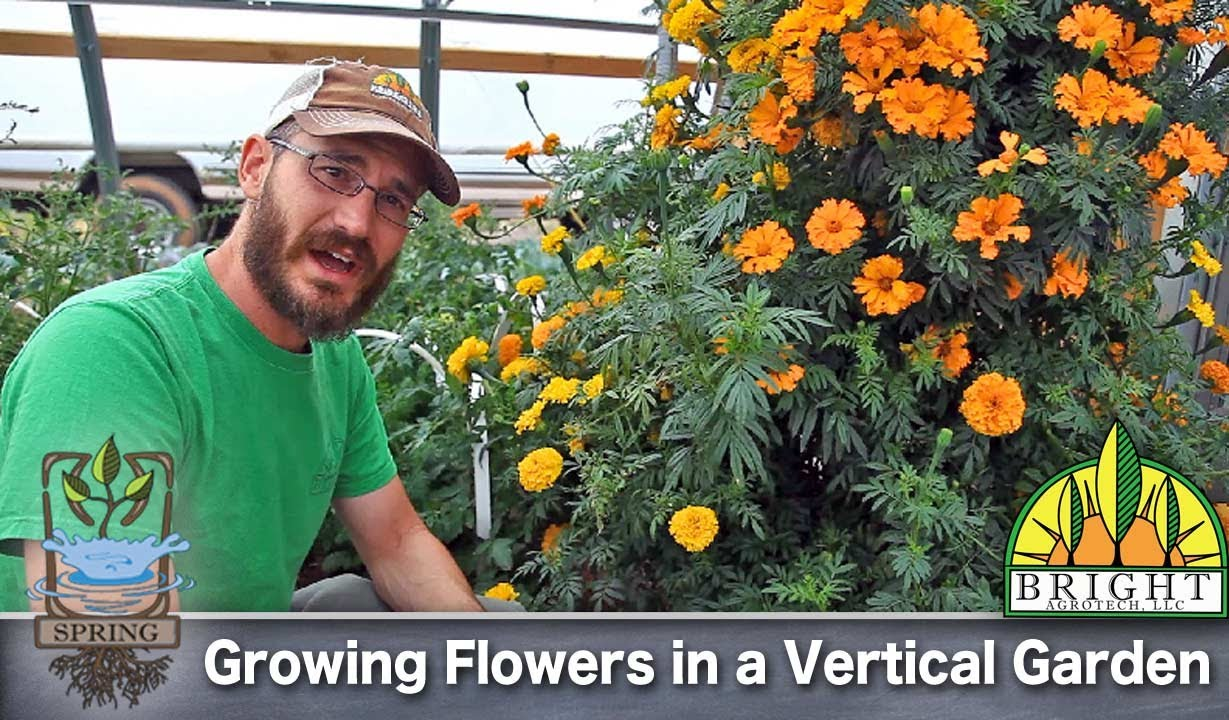 Can You Grow Flowers In A Vertical Garden?   YouTube