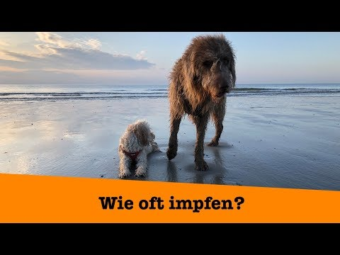 Wie oft sollte ich meinen Hund impfen? Die klare Antwort