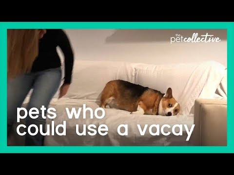 Pets Who Could Use a Vacay | The Pet Collective