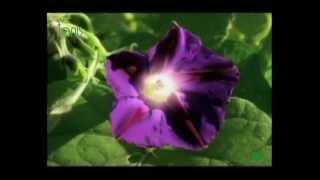 🌺 Мир цветов - Наркотики