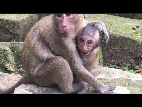 Bad Mommy Monkey Get Angry With Baby And Make The Baby