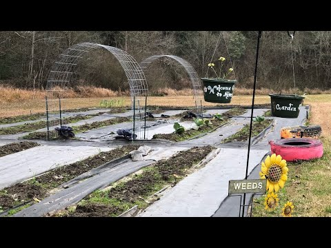cattle-panel-trellises-&-small-greenhouse-set-up-|-mimsy's-garden-|-poorboy-homestead