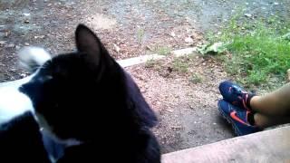 Если ты не подпишешься на этот канал то этот кот у...