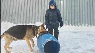 Будьте окуратны оставляя ребенка на едине с собакой