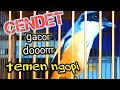 Masteran Burung Cendet Full Isian Mewah Cendet Stress Pun Langsung Nyaut  Mp3 - Mp4 Download