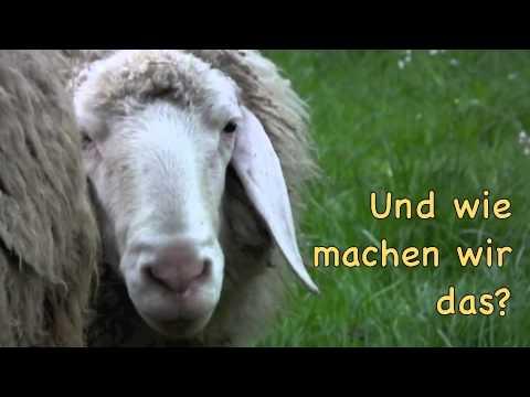 Vom Schaf Zum Pullover