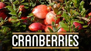 Cranberries   How to Make Everything: Thanksgiving Dinner (3/5)