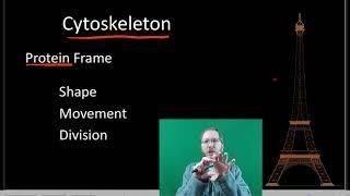 Cytoplasm and Cytoskeleton