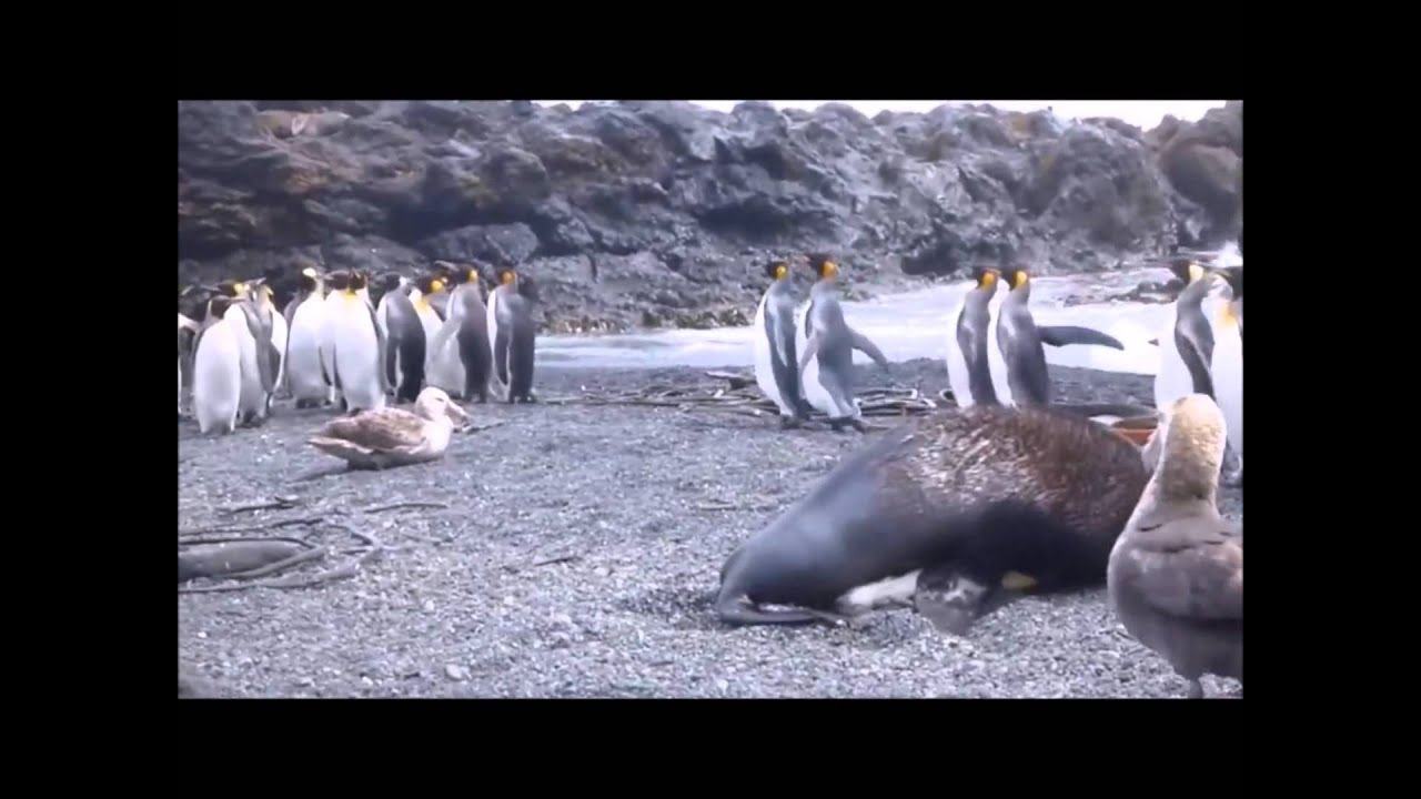 Nine Inch Nails March of the Penguins - YouTube