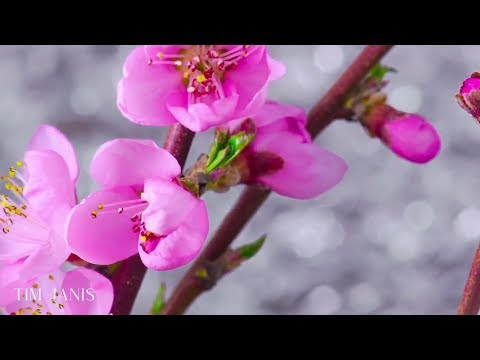 """Relaxing Hymns On Piano, Peaceful Instrumental Music,  """"Palm Sunday"""" By Tim Janis"""