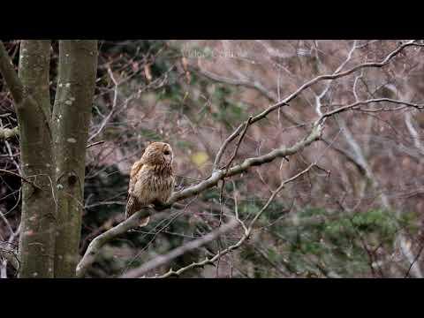 v přírodě -video Čergov