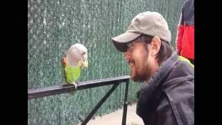 Truman Cape Parrot Getting Found in Canarsie Brooklyn