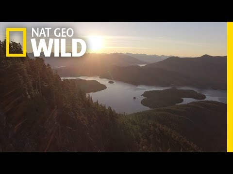 Vancouver Island: A Wild World Within Your Reach | wild_life with bertie gregory