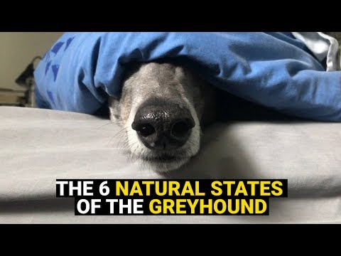 The 6 Natural States of the Greyhound
