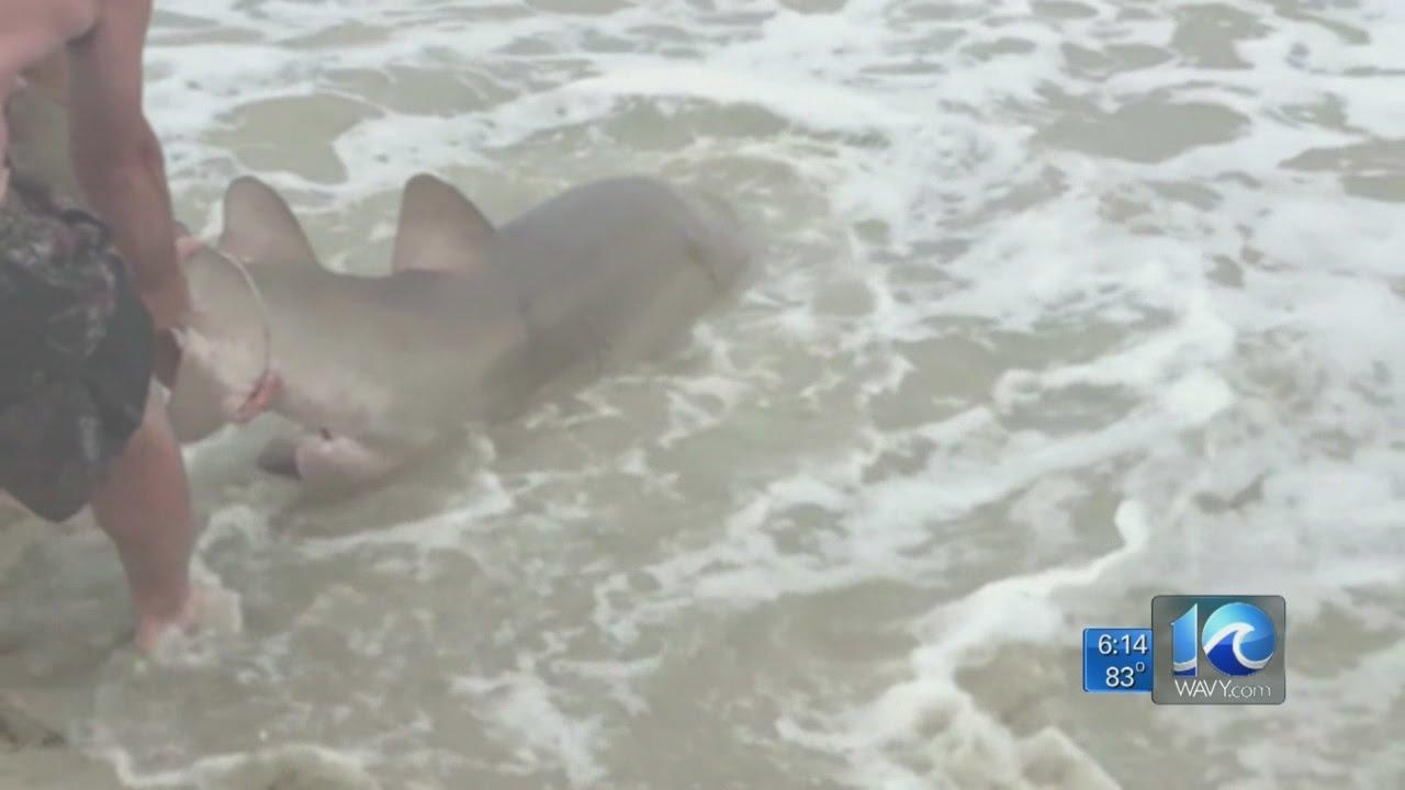 Shark Attacks In Virginia Beach