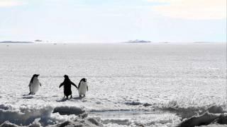 南極で撮影した野生のアデリーペンギンです。 画面奥、遠く離れた場所で...