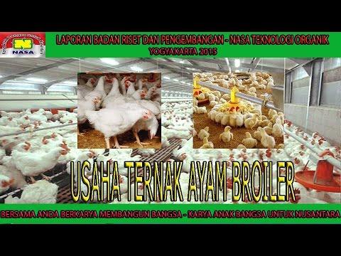 087839383561 Cara Ternak Ayam Potong | Cara Beternak Ayam ...