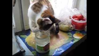Наша кошка ест и без ложки!