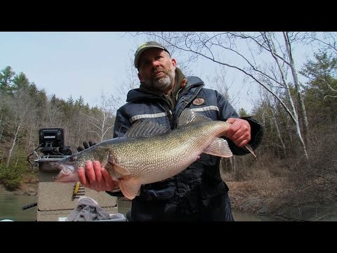 Outdoor Journal - Raising Walleye