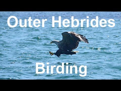 Outer Hebrides Birding May 2016