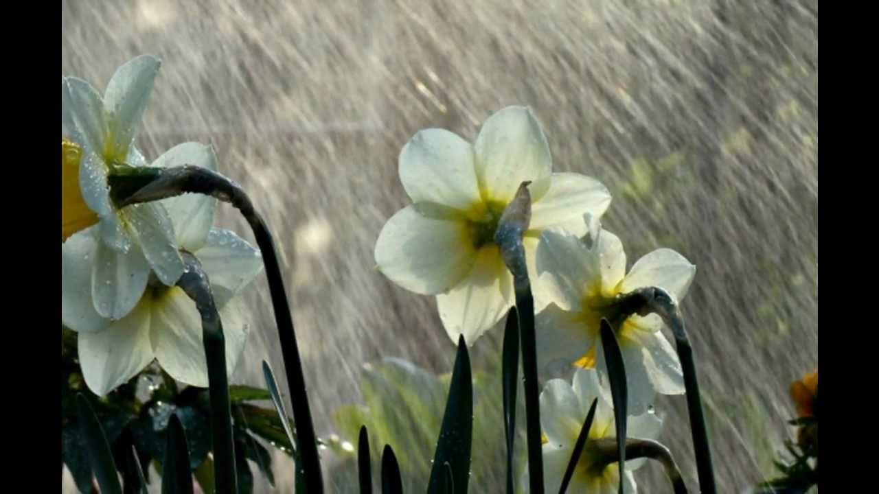 song of the rain by khalil gibran ppt music