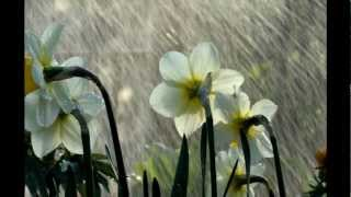 Song of the Rain ~ Inspirational Poem by Kahlil Gibran