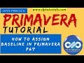 How to Assign Baseline in Primavera P6 || dptutorials