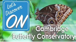 Let's Discover ON - Cambridge Butterfly Conservatory