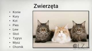 Мастер класс №4  Свободное говорение на польском языке!
