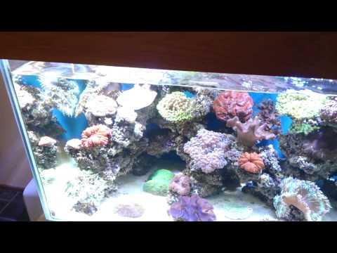 Using Magnesium To Increase Coralline Algae