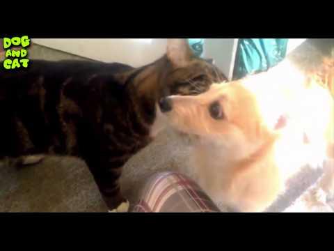 ٩(-̮̮̃-̃)۶ Kittens and Puppies Compilation 2016 ٩(-̮̮̃-̃)۶