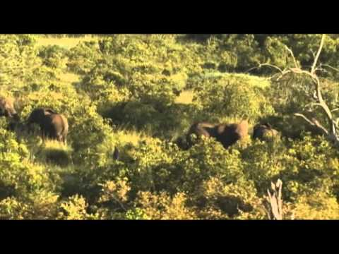 African Safari Videos - Terri New sings AFRICA -www.AfricanSafaris.travel