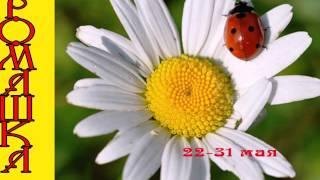 видео Цветочный гороскоп