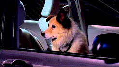Dog With A Blog - Stan Guards The Car
