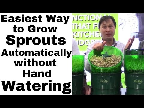 Easiest Way To Automatically Grow Sprouts Without Hand Watering