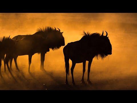 Pilanesberg nature sounds: Mankwe Dam Hide | African wildlife & animal noises, meditation lion roar