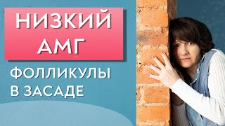 видео Антимюллеровский гормон / АМГ