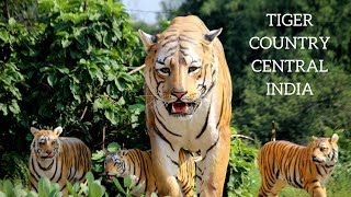 CENiN Welcomes you to Tiger Country Central India